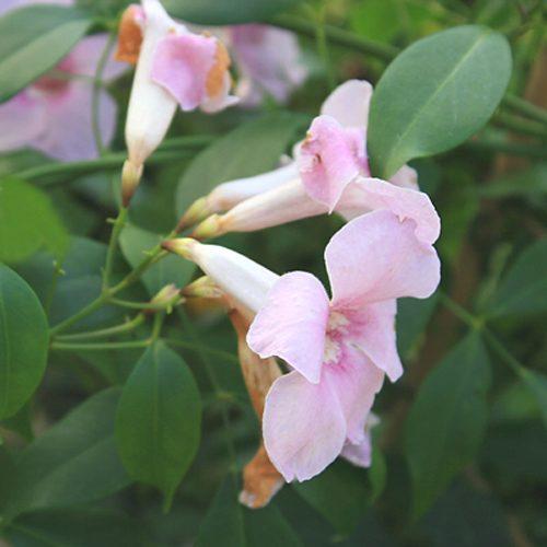 Kwiaty z Floresco 05