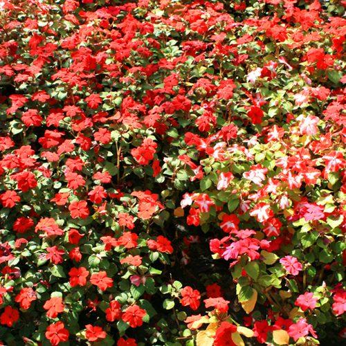 Kwiaty z Floresco 14